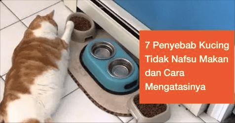 7 Penyebab Kucing Tidak Nafsu Makan Dan Cara Mengatasinya Tanya Dokter Hewan