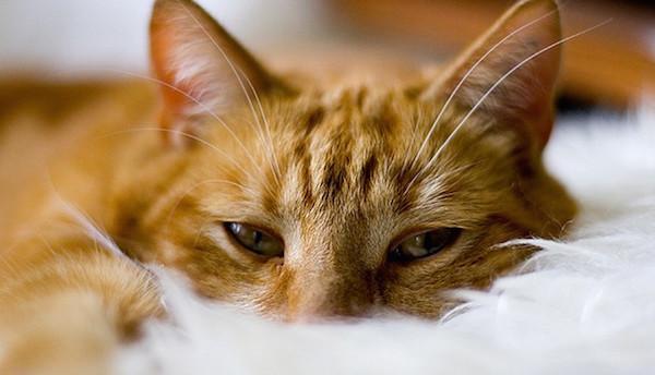 Bahaya tidur bersama hewan peliharaan