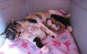 Penyebab Muntah Cacing Pada Kucing dan Anjing