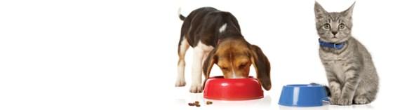 Makanan anjing, makanan kucing