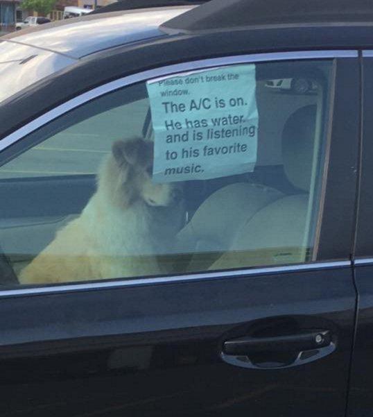 Membiarkan anjing dan kucing di dalam mobil