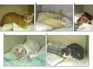 Kenali 6 Tanda Kucing dan Anjing Sakit