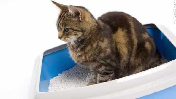 5 Tips Mengurangi Bau Kucing dan Anjing di Rumah