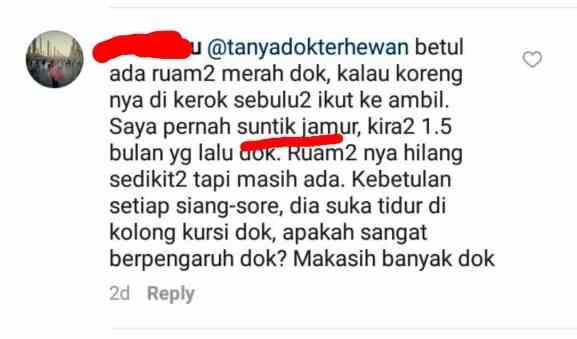 Pertanyaan di Instagram @tanyadokterhewan tentang suntik jamur pada kucing