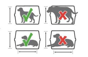 Posisi hewan yang sesuai dalam kennel box
