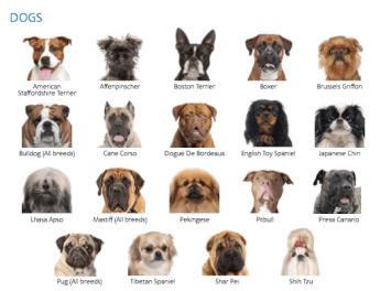 Anjing rahang pendek