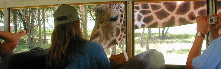 texas summer travel guide, tanyafoster.com