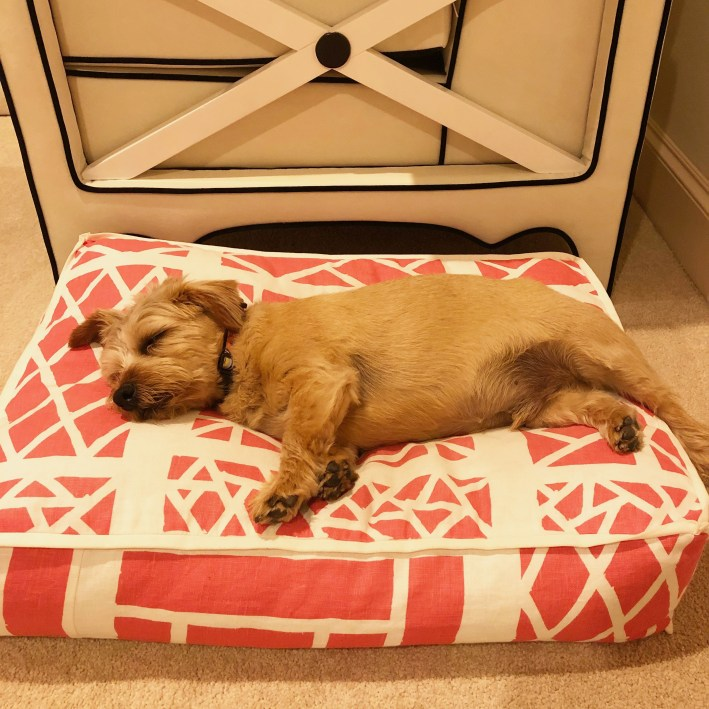 Max on a custom dog bed from Amy Berry Design