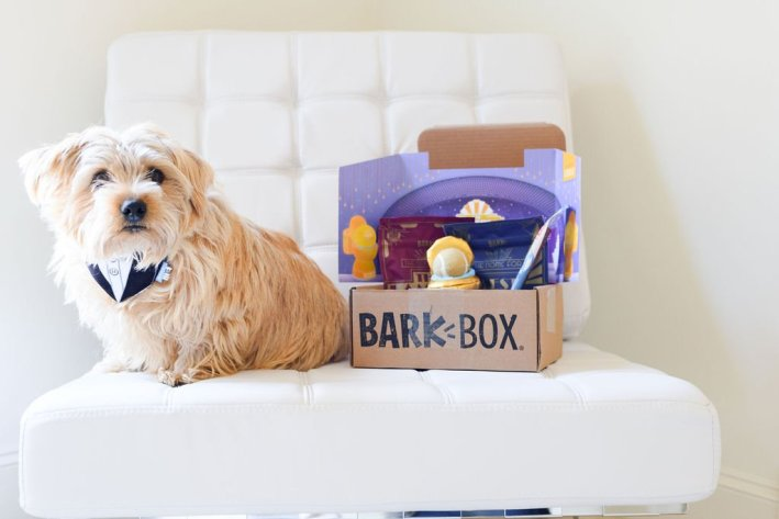 dog sitting with BarkBox