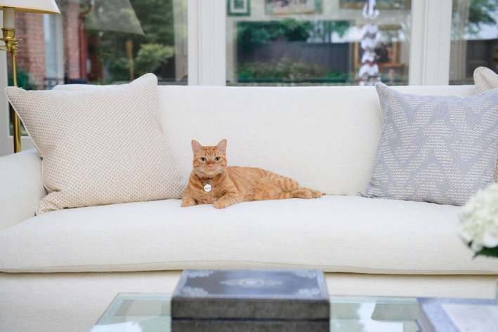 Orange tabby cat on Crypton covered sofa