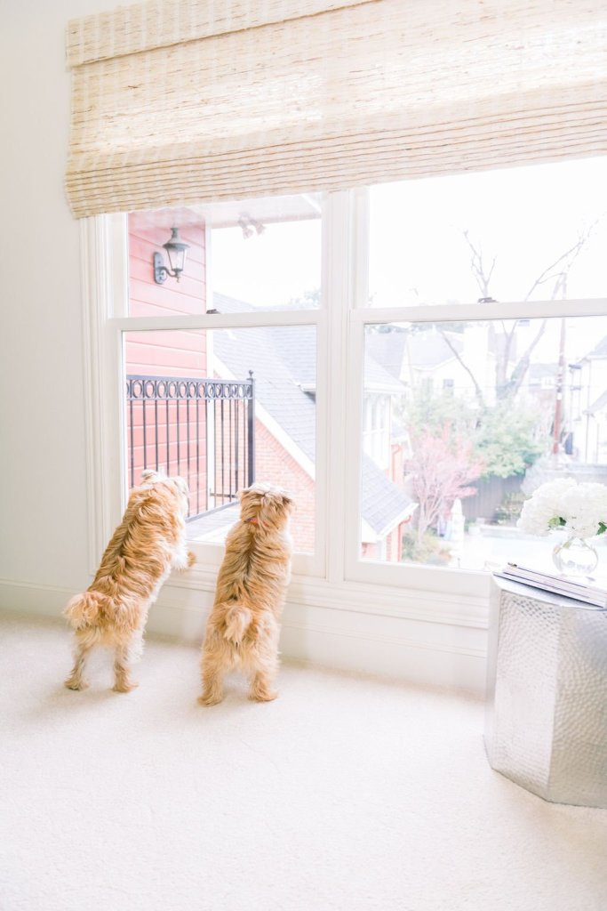 Sparky and Max looking out the window coping with difficult times