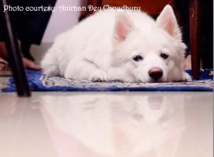 Photo by Anirban Dey Choudhury