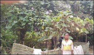 Nutrition Gardening. Photo credit: Shreeja India