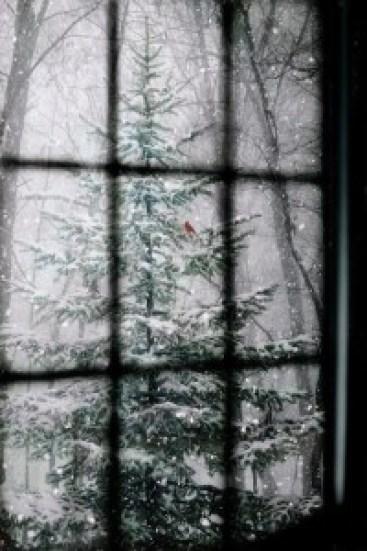 Christmas tree red robin