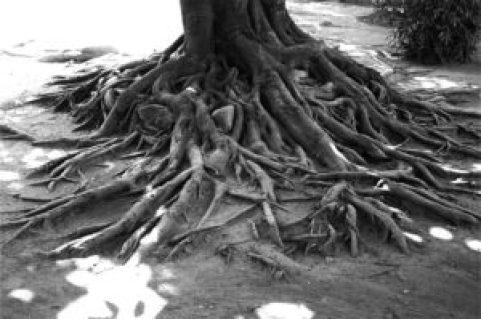 tree-698707_640