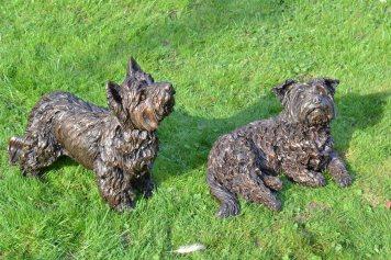 Yorkshire Terrier Pair
