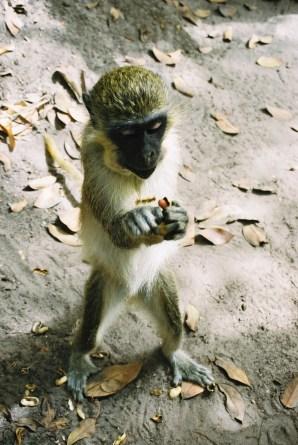 04Bijilo Forest 039