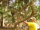 04Bijilo Forest 006