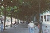 25aShady Street - Talosa