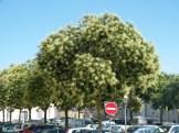 La Rochelle 040