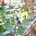 Variable Sun Bird