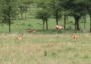 Day 1 Serengeti (266)