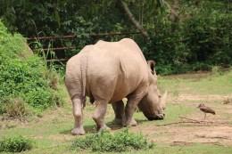 10 Entebbe Zoo (148)