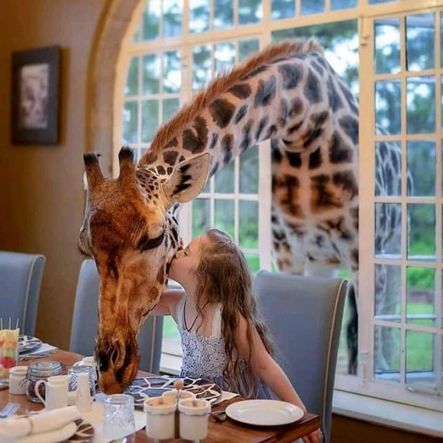 Tanzania Tailor – Made Safari