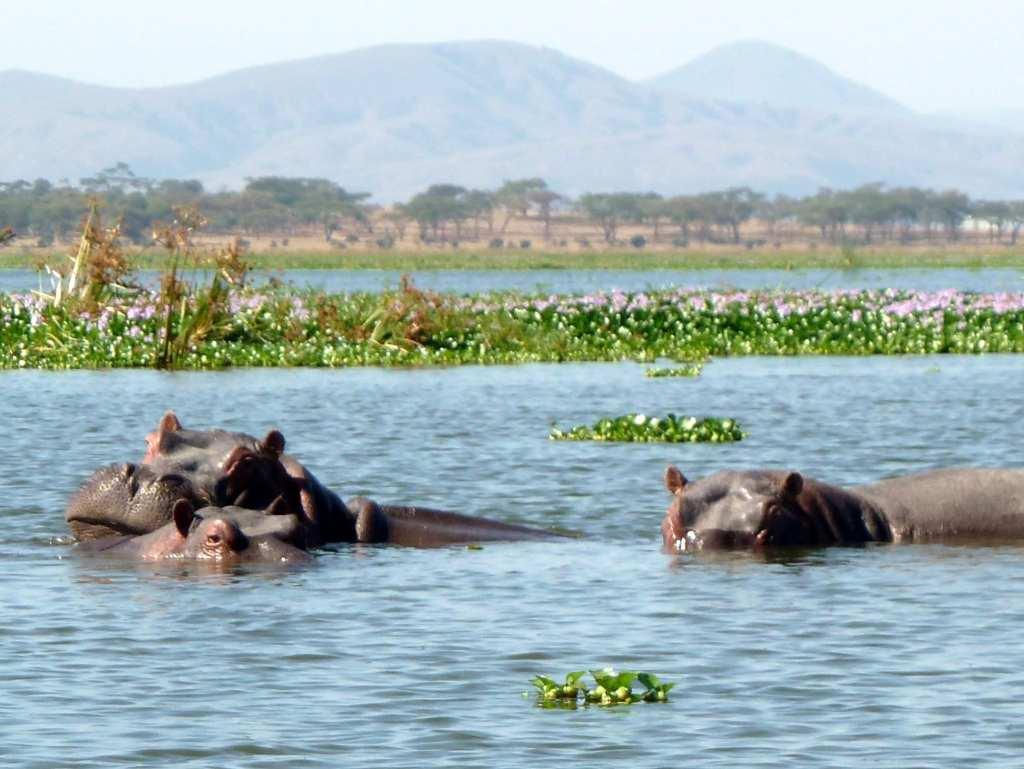 Hippo Lake Naivasha National Park