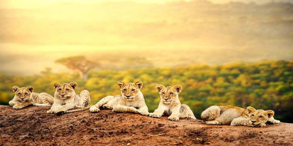 Kenya safari destination