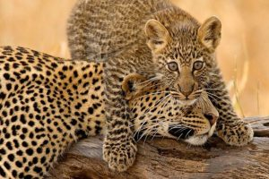 12 DAY BUDGET TENTED CAMPS SAFARI AND ZANZIBAR