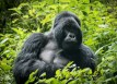 3 DAY ADVENTURE GORILLA TREKKING SAFARI TO RWANDA