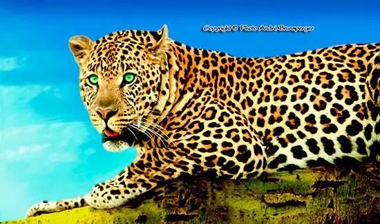safari authentique en 4x4 privatif Léopard en Tanzanie