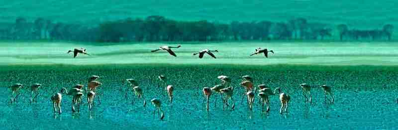 Safari tanzanie pas cher Cratère du N'Gorongoro Tanzanie