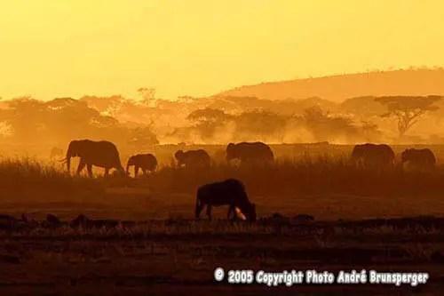 Ombre Chinoise avec éléphants en Tanzanie