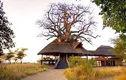 Safari a moto en Tanzanie. Tarangire River Camp construit dans les baobabs
