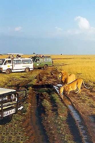 Je n'aime pas cela !! au Serengeti. liste des parcs et réserves en Tanzanie