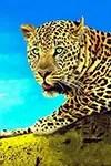 Safari Classique en Tanzanie