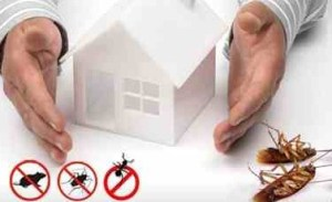 مكافحةن حشرات بالمدينة المنورة