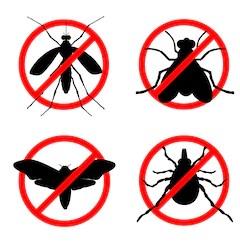 رش حشرات بالمدينة المنورة