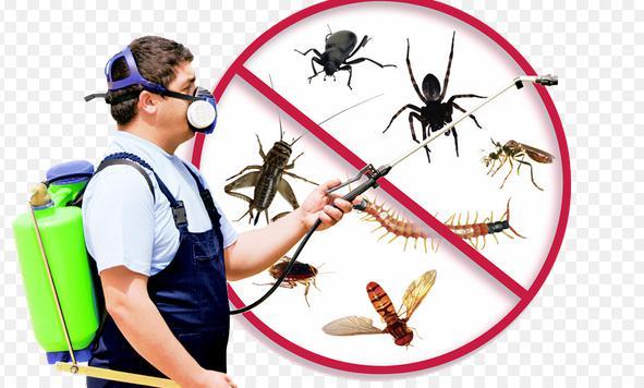 شركة مكافحة حشرات بالرياض , رش حشرات بالرياض , مكافحة حشرات بالرياض
