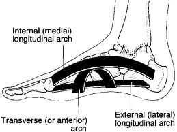 Spring mechanism of the arch of the foot. It hurts when I run