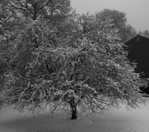 Winter wonderland again 0004
