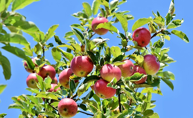 Mein erster roh-veganer Apfelkuchen