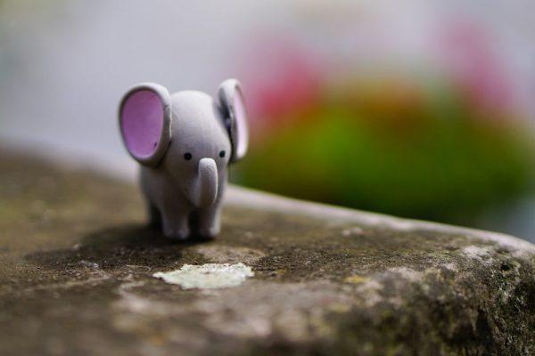 minority elephant