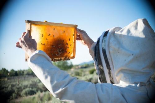taos-honey-hive2-raw-honey