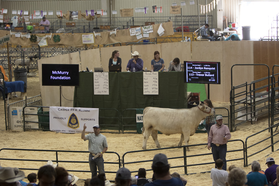 livestock auction