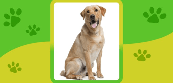 name the dog breed quiz answers