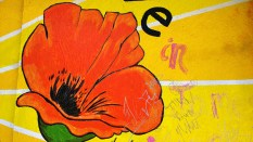 Orange poppy wall painting