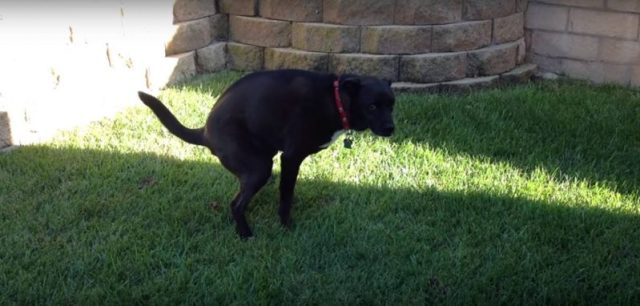 Fed-Up With Dog Poop In Her Yard, Woman Gets Hilarious Revenge